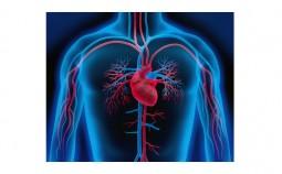 schnarchen-Herz-kreislauf