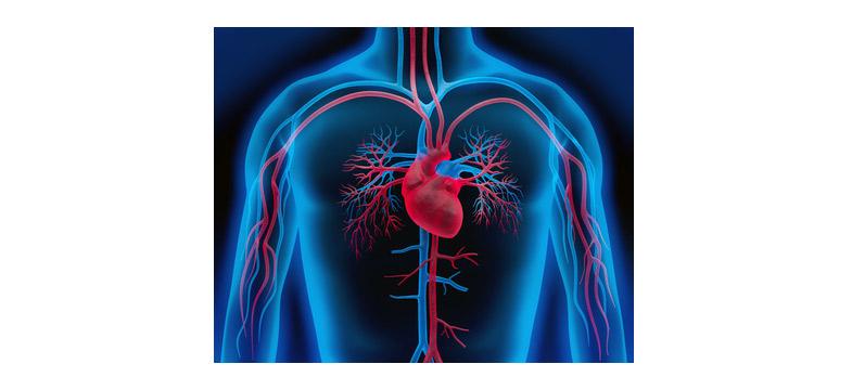 Schnarchen Herz-Kreislauf